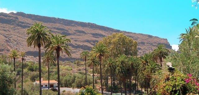 Appartementen El Olivar - uitzicht
