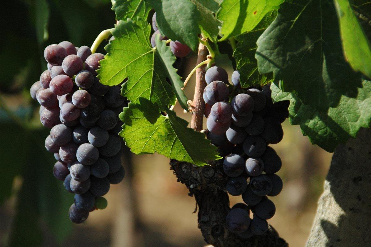 Appartementen Tenuta Madonnina - wijnlandgoed