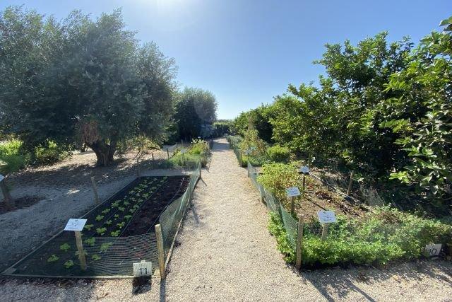 Quinta dos Perfumes - groente-/ kruidentuin